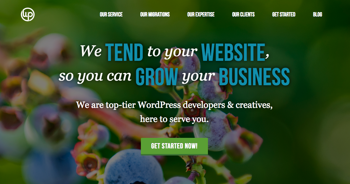 Organic WordPress business growth service and expertise.